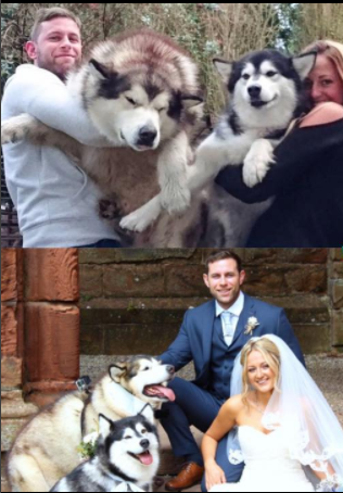 Photos: Couple Chose Their Dogs As Maid Of Honor And Best Man (Must See)